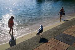 Manly Women and Bird (Mondmann) Tags: manly beach bird australia nsw newsouthwales shadow shore women candid mondmann canonpowershotg7x