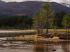 Pines (Geoff France) Tags: landscape scottishlandscape cairngorms cairngormsnationalparkmorlichloch morlichtreefir tree water