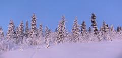 100726_7  E45 mellan Gällivare och Porjus (What about the Arctic) Tags: 2018 norrbottenslän lappland sverige gällivarekommun e45 porjus jokkmokkkommun
