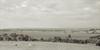 lake-connewarre-8052-ps-w (pw-pix) Tags: horse horses paddocks grass pasture trees horizon shoreline shore dry driedout lakeconnewarre connewarre wallington geelong victoria australia peterwilliams pwpix wwwpwpixstudio pwpixstudio