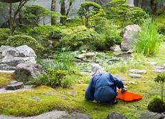 Jardinier de mousses 永観堂禅林寺 Eikan-dō Zenrin-ji  Kyoto (geolis06) Tags: geolis06 asia asie japan japon 日本 2017 kyoto eikandotemple eikandōzenrinji 永観堂禅林寺 japon072017 olympuspenf olympusm918mmf4056 bouddhiste bouddhistme jardin garden