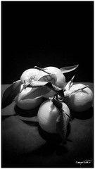 mandarini 2, hdr black and white (Massimo Vitellino) Tags: hdr blackandwhite indoors minimalist fruit nature lights shadows personalperspective abstract contrast conceptual noperson