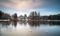 winter (augustynbatko) Tags: winter lake water birds landscape view sky trees clouds nature