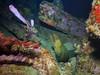 bvi 17 P8312440 (Pauline Walsh Jacobson) Tags: underwater scuba dive diving bvi water coral reef ocean sea marine life wideangle fish