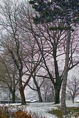 Just some trees on a small hill (Matjaž Skrinar) Tags: 100v10f 250v10f