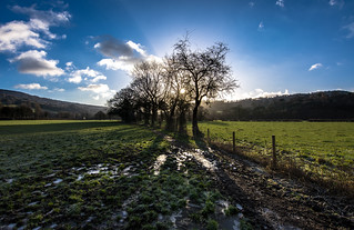 tree line (explored)