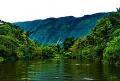 Hawaii-WaipioValley-82.jpg (Chris Finch Photography) Tags: jungle hawaiiphotography waipio taro waipiovalley hawaii landscapephotographs landscapephotography photographs chrisfinch wwwchrisfinchphotographycom chrisfinchphotography utahphotographer tarofarms bigisland tarofarm tropical valley