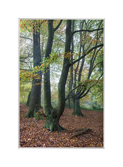 Whiteways, Arundel. (John Dominick) Tags: whiteways arundel south downs national park autumn trees colour woodland
