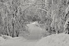 Tunnel (Stefano Rugolo) Tags: stefanorugolo pentax k5 pentaxk5 vivitar80200mmf4macrofocusingzoommc snow winter landscape tree forest road countryroad branches hälsingland sweden sverige tunnel ricohimaging monochrome blackandwhite
