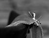 dentelle posée - posed lace (vieux rêveur) Tags: dentelle lace chaise chair nb bw noiretblanc noir black white blanc bokeh gris grey