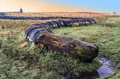 10/365 in 2018 - Vegetable & Mineral with Animal Connections! (Snake in the Grass) (Nikki M-F) Tags: 365 snake uk vegetable wales wood log tyres