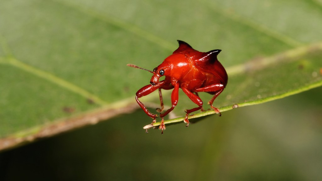 The World's newest photos of red and weevil - Flickr Hive Mind