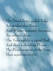 Dandelion Poem (Stanley Zimny (Thank You for 28 Million views)) Tags: poem bronx botanical garden dandelion flower light shadow
