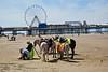 Mules, Blackpool, UK (Robby Virus) Tags: blackpool england uk unitedkingdom britain greatbritain mules donkeys rides beach ferris wheel pier