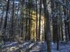 Light passes through darkness, always. (Pearce Levrais Photography) Tags: sun sunlight sunbeams beams canon 7d markii hdr landscape deep
