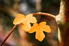 Together, forever! (bharathputtur122) Tags: together forever love companion autumn yellow leaf bokeh nikon d750 nikkor twig tree branch colour emotion sunny bright form shape