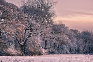 The Fresh Fallen Snow