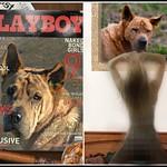 Playboy thumbnail