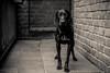 Ole (www.altglas-container.de) Tags: dog pet ole hund haustier monochrome schwarz weiss black white