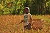 IMG_0490 (Kalina1966) Tags: bali island indonesia people rice field