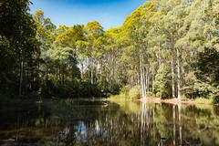 20180122-IMG_5407.jpg (tastigr) Tags: australia afternoon victoria macro wildlife macedonranges summer
