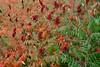 Autumn (richard.scott1952) Tags: color colorful colour colourful scene scenic view flower leaf leaves tree trees nature outdoor pretty autumn season seasonal fuji xpro