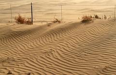 Fugative Sand (arbyreed) Tags: arbyreed sand dunes blowingsand sandripples fence oakcityutah millardcountyutah sandwaves tumbleweed dontfencemein barbedwirefence hff