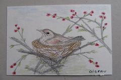 défi dessin jour 2: oiseau (mmarple62) Tags: dessin drawing defi défidessin drawingchallenge oiseau oiseauxdujardin bird birdsofthegarden crayon pencil