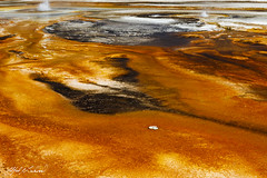 Black Sand Basin_27A0682 (Alfred J. Lockwood Photography) Tags: alfredjlockwood nature landscape blacksandbasin yellowstonenationalpark geothermalrunoff microbialmat geyser eruption color summer noon texture wyoming