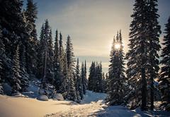 Snowshoe Trail (ValeTer_) Tags: nikond7500 mtrainiernationalpark nationalpark usa wa washingtonstate rainier snow winter