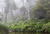 IMG_5564b (ManFromOz) Tags: ©geoffsmith gemaxphotographics mist braesidewalk blackheath bluemountains trees