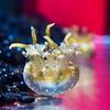 Just Another (Thomas Hawk) Tags: america chicago cnidaria cookcounty illinois johngsheddaquarium museumcampuschicago sheddaquarium usa unitedstates unitedstatesofamerica aquarium jellies jellyfish fav10