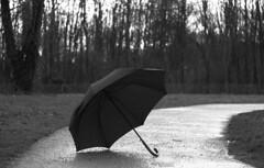 Après la pluie...  (After the rain...) (l'imagerie poétique) Tags: lìmageriepoétique poeticimagery kodakfilm hmbthelios85mmf15 russianlens pentaxmesuper istillshootfilm believeinfilm filmisnotdead 35mmfilm