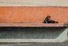 午間稍憩|喵星人 (里卡豆) Tags: 嘉義市 臺灣省 台灣 tw olympus75300mmf4867ii taiwan penf 貓 喵星人 cat cats