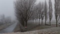 Geniedijk, Haarlemmermeerse Bos (Hans Westerink) Tags: hoofddorp noordholland nederland nl floriade bomen trees dijk bos haarlemmermeerse hanswesterink winter rijp