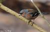 Jean-Luc Wolf_2018-02-18_11-25-37 (Jean-Luc Wolf) Tags: oiseaux parcdesceaux pinsondesarbres sceaux antony îledefrance france fr