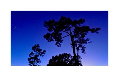Twilight (BlueisCoool) Tags: flickr foto photo image capture picture photography nikon coolpic l330 blue tree sunset twilight sky color colors vivid pretty beautiful nature outdoor florida skyporn floridasunset trinityflorida