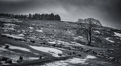 Bleak Mid Winter. Rawtenstall. (Rob Rossington) Tags: cold winter tree lonetree sheep lancashire rawtenstall snow melting thaw freeze landscape fuji xpro1