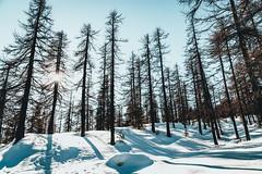 DSC01351 (Max_from_Pine) Tags: snow mountain monti della luna cesana sestriere sunset alps tealorange travel explore create path walk trekking