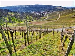 Weinberge (almresi1) Tags: schnait remstal weinstadt vineyards nature landscape dorf village germany mountains berge ways wege