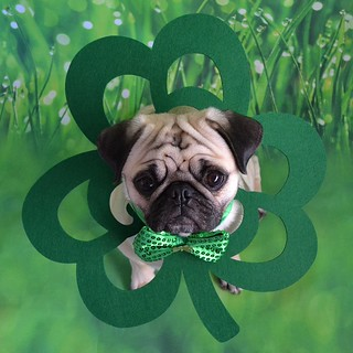 My Little Shamrock Lucky Boo Lefou