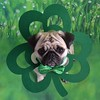 My Little Shamrock Lucky Boo Lefou (DaPuglet) Tags: pug pugs dog dogs animal animals pet pets stpatricksday irish shamrock clover green costume bowtie march holiday cute patrick paddy stpaddysday fantasticnature coth coth5
