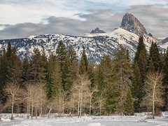 trail in Teton Canyon (maryannenelson) Tags: wyoming tetoncanyon dog landscape snow winter tree tetons mountain