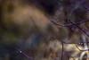 Drops (sibnet2000) Tags: yakimariver nature winter wintermorning canon5dmarkiv tamron70200f28