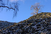 Spoil heap tree (timnutt) Tags: view trees treeline landscape tree mine industrial coniston quarry cumbria rural slate