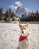 🌎 Canada   Jasper (adventurouslife4us) Tags: snow winter puppy dog love adventure wanderlust outdoor travel explore nature photography canada