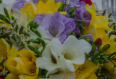 Winter bouquet (frankmh) Tags: flower bouquet january winter kullagunnarstorp indoor macro