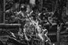 180120_Reserva-Indigena-Rio-Silveira_043 (Luiz Henrique Foto) Tags: luizhenriquefoto luizhenriquephoto aldeia aldeiaguarani aldeiaguaraniriosilveira aldeiaindígena allrightsreserved autoral beach bertioga bertiogasp bonfire culturaindígena desenhandoaluz eco ecologia estadodesãopaulo fire fogo fogueira fotografiaautoral fotografiadeviagem horizontal indianreservation indigenousvillage indigenousvillageguaraniriosilveira indigenousculture litoral litoralnortedesãopaulo luizhenriquefotografia naturephotography natureza outputphoto playa praia praiadeboracéia reservaindígenariosilveira reservaindígena riosilveiraindigenousreserve sp saídafotográfica sãopaulo todososdireitosreservados travelphotography coast sand shore strand waterside wwwluizhenriquefotocombr ©luizhenriquerocharodrigues índio índioguarani brasil fotografiadenatureza