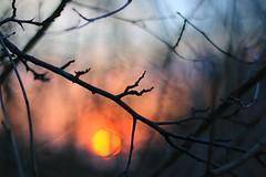 Branch in sunset (mgreiersen) Tags: branch sunset tree sun denmark canon eos70d daylight dof bokeh