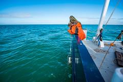 FGCU_RV_MT_Hogarth_005 (FGCU   University Marketing & Communications) Tags: second fgcu rvmthogarth photocreditjamesjgreco fio gulfofmexico oceanography waterquality students academics